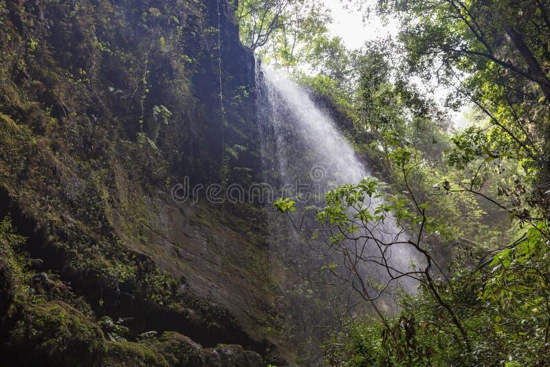 Cascata alla pioggia Forest La Palma di Los Tilos Le Isole Canarie immagini stock libere da diritti