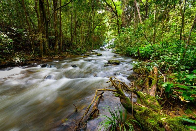 A cascata cai sobre o tronco musgoso na floresta úmida com o lo claro do rio imagem de stock royalty free