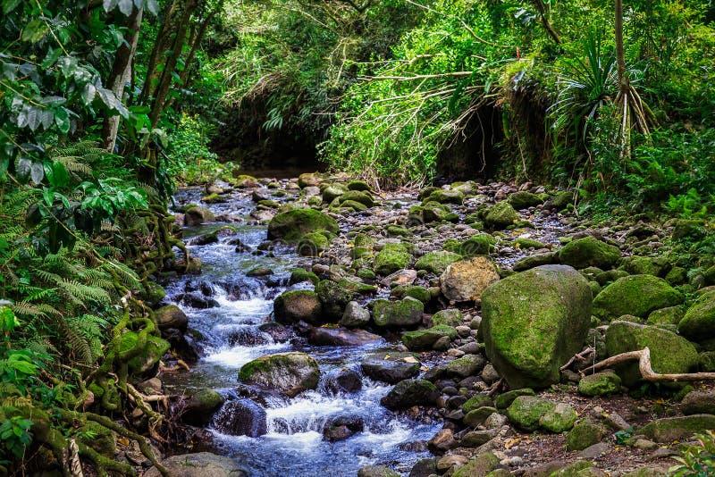 Cascata da angra na floresta úmida da ilha de Oahu, Havaí fotografia de stock royalty free