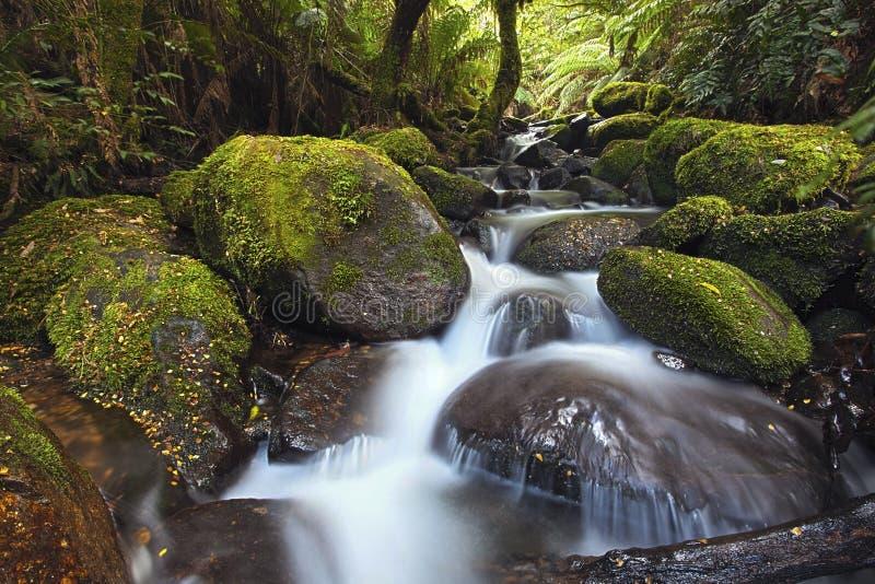 Cascata da floresta húmida fotografia de stock
