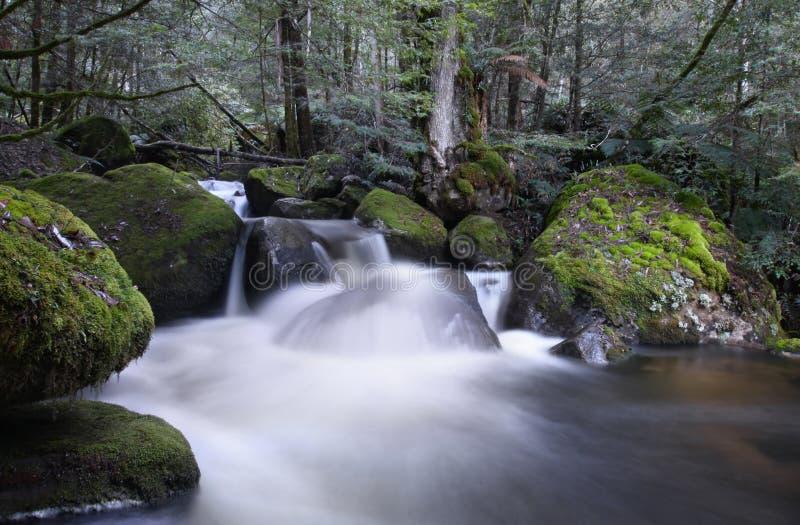 Cascata da floresta húmida imagens de stock