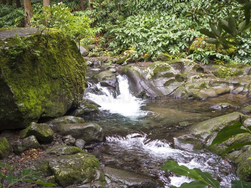Cascata da mola de água com musgo e pedras e vegetação verde luxúria na selva da floresta úmida no fim da caminhada imagem de stock royalty free