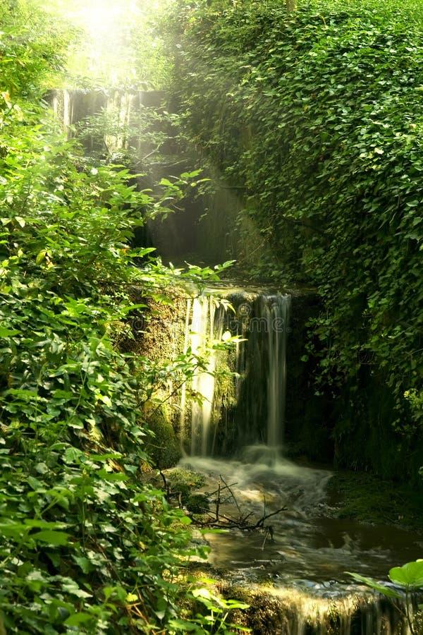 Cascata della foresta fotografie stock libere da diritti