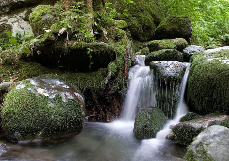 Cascata della foresta. fotografia stock libera da diritti