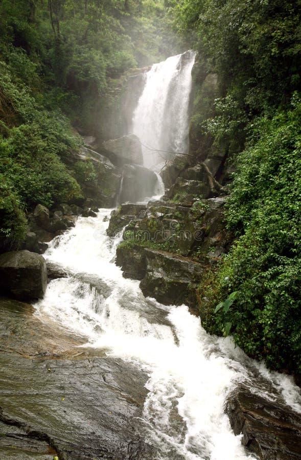Cascata della giungla della Sri Lanka    fotografie stock libere da diritti