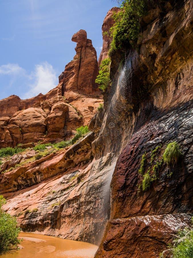 Cascata della primavera naturale in coyote Gulch Utah fotografia stock libera da diritti