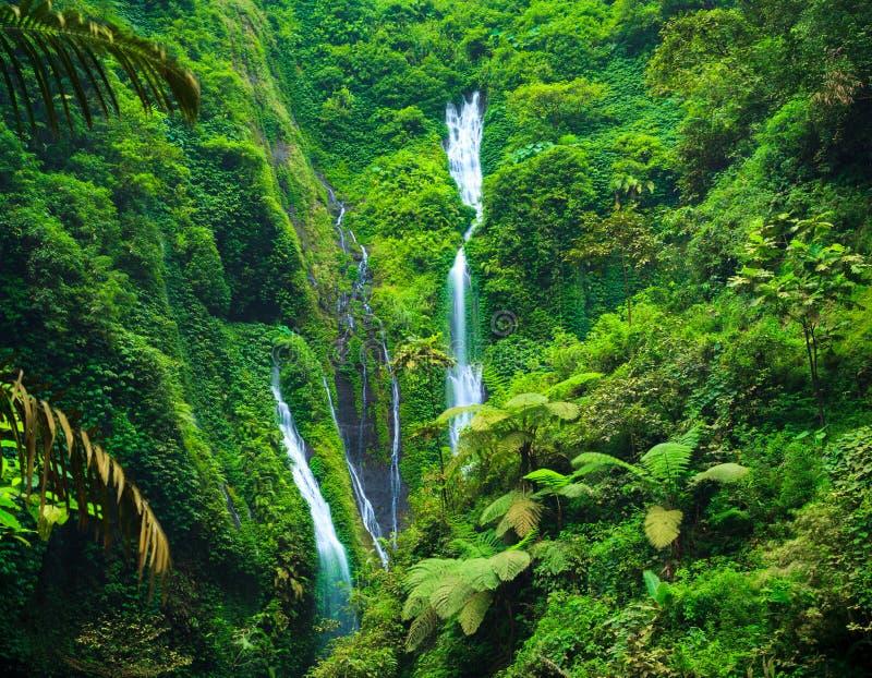 Cascata di Madakaripura, East Java, Indonesia fotografie stock
