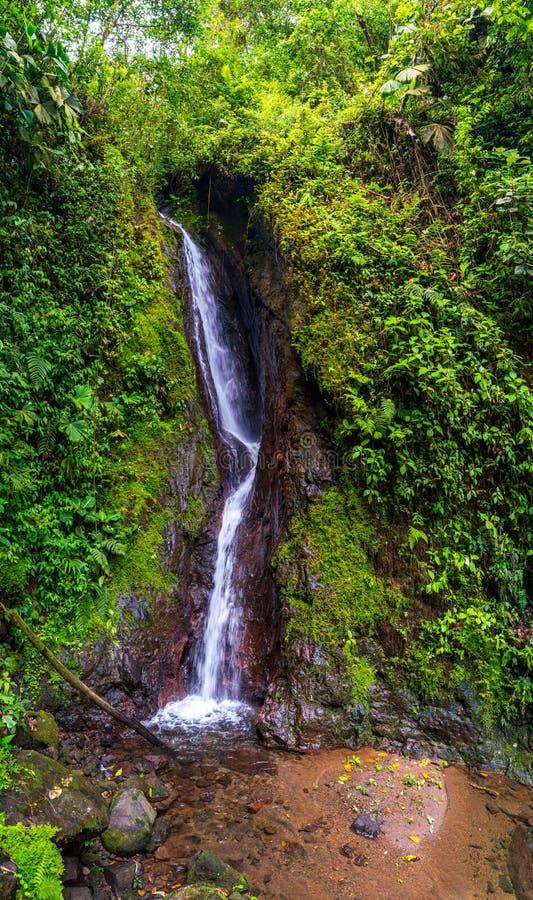 Cascata di Mistico, ponti pendenti, Alajuela, Costa Rica fotografie stock libere da diritti