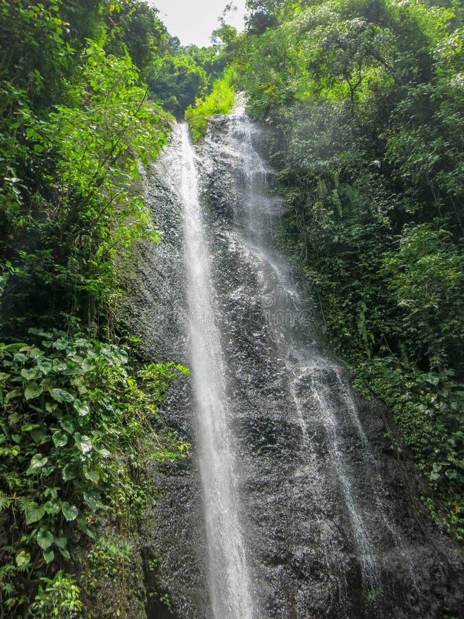 Cascata di Yeh Labuh in giungla selvaggia sull'isola di Bali in Indonesia Cascata nascosta nella giungla tropicale fotografia stock