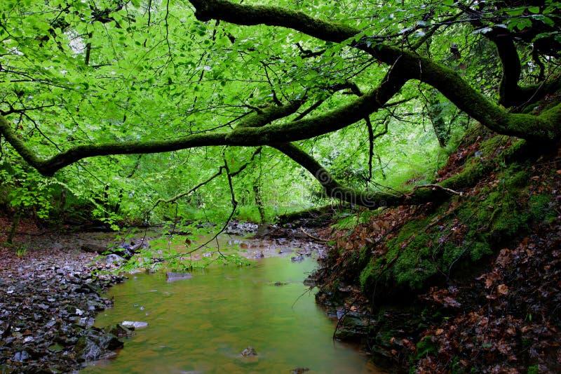 Cascata e fiume grigi della coda di cavalle fotografia stock