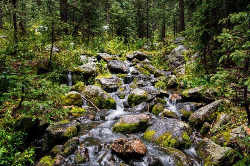 Cascata e massi muscosi in foresta alpina verde fertile fotografia stock libera da diritti