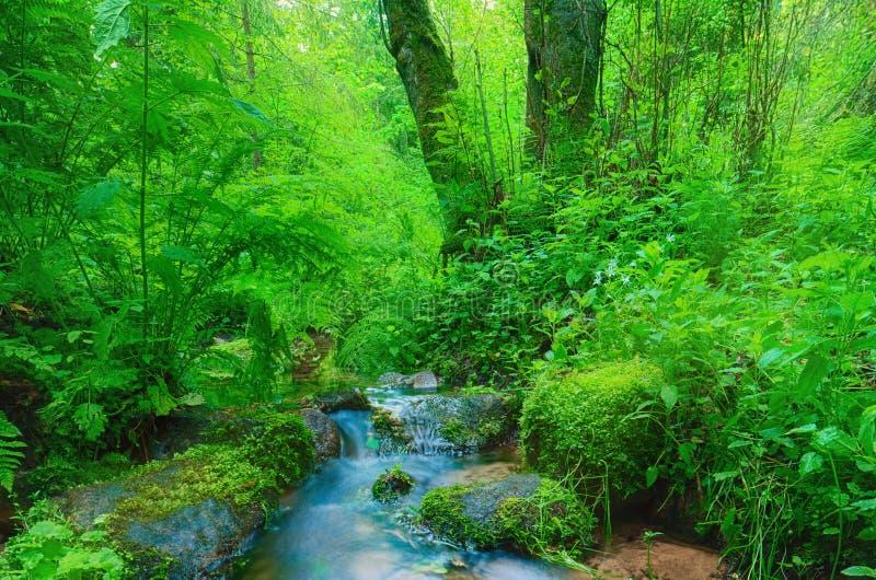 Cascata e rocce della foresta coperte di muschio immagini stock
