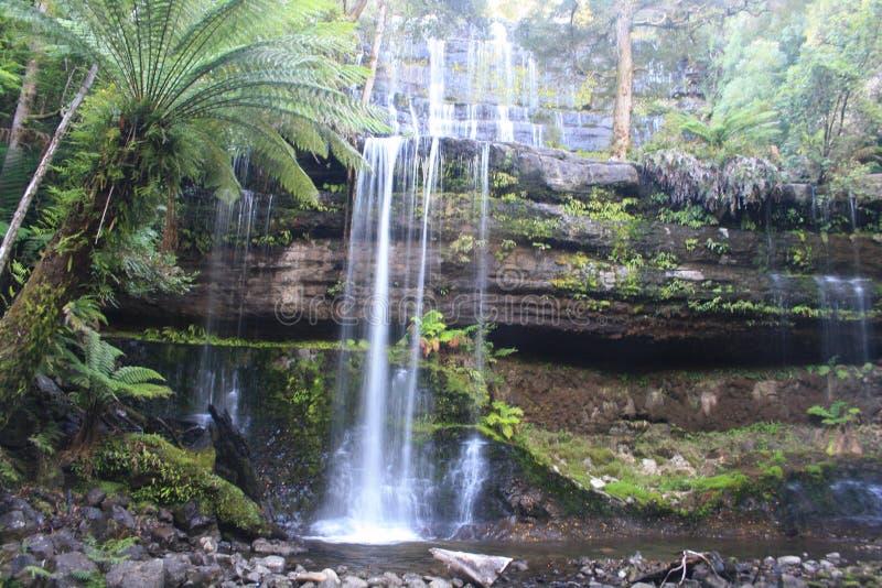 Cascata e samambaia de árvore Tasmânia fotografia de stock royalty free