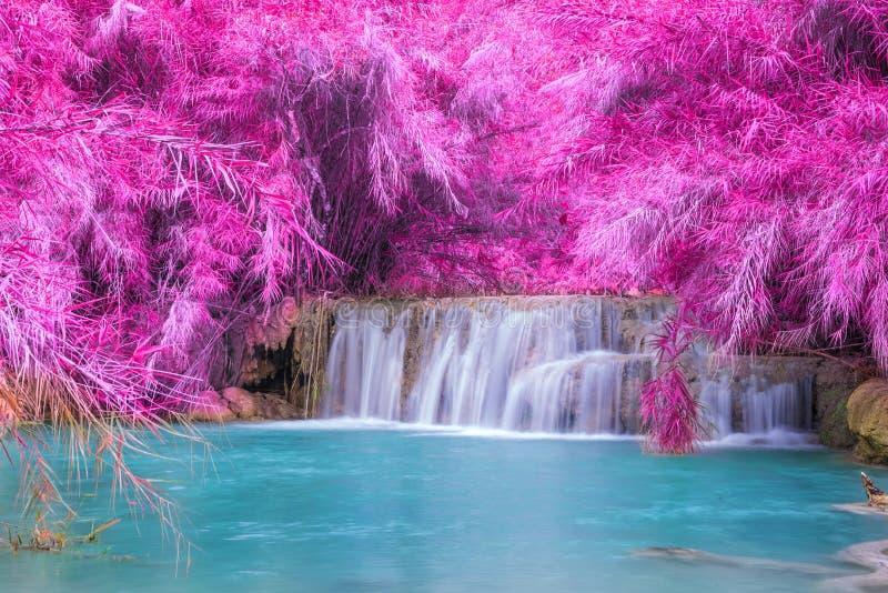 Cascata in foresta pluviale (Tat Kuang Si Waterfalls fotografia stock