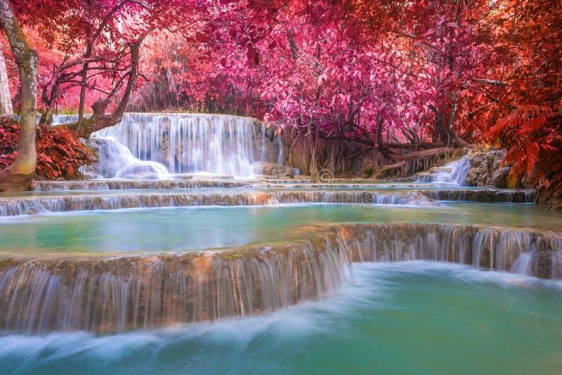 Cascata in foresta pluviale (Tat Kuang Si Waterfalls al prabang di Luang fotografia stock libera da diritti