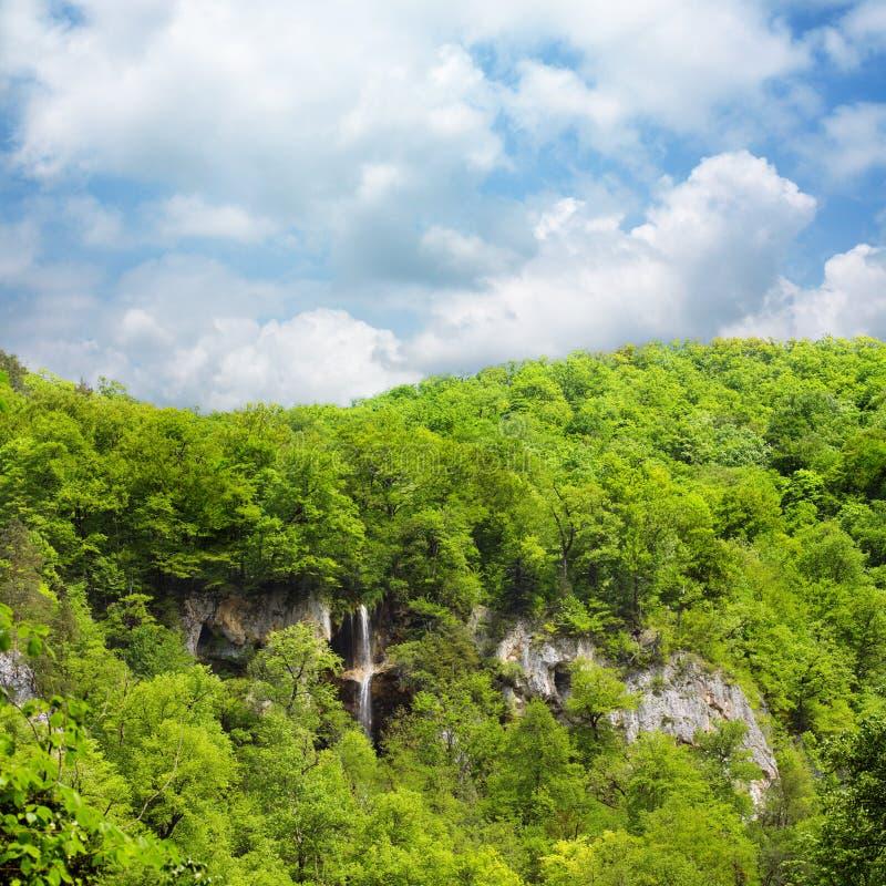 Cascata in foresta verde fotografia stock