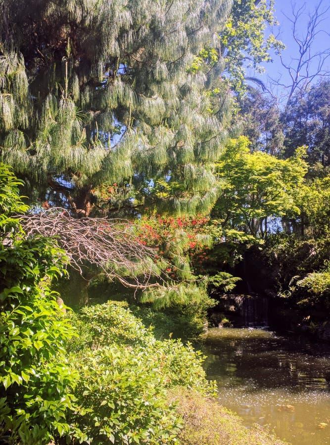 Cascata giapponese del giardino fotografie stock