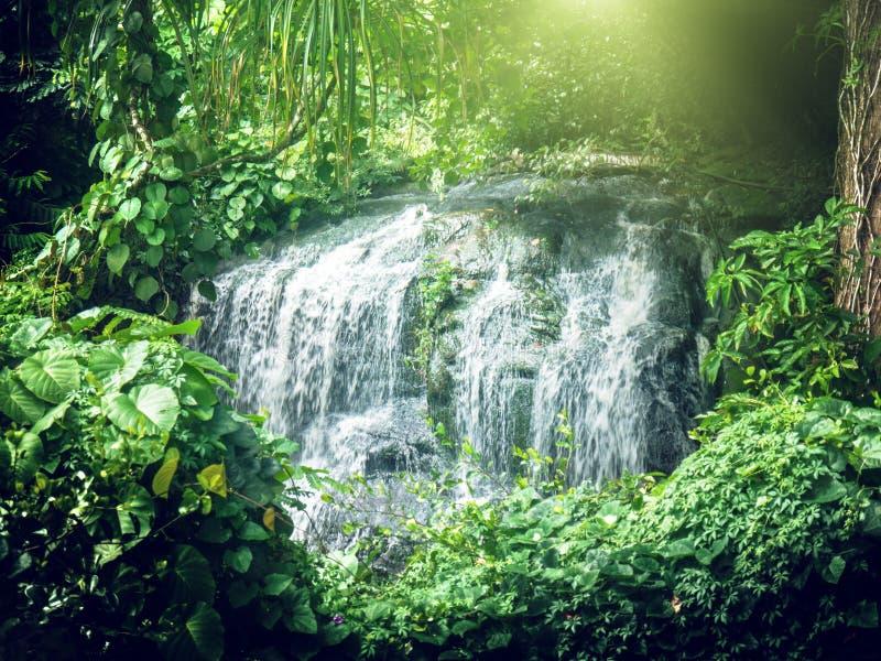 Cascata in giungle delle Seychelles fotografie stock libere da diritti