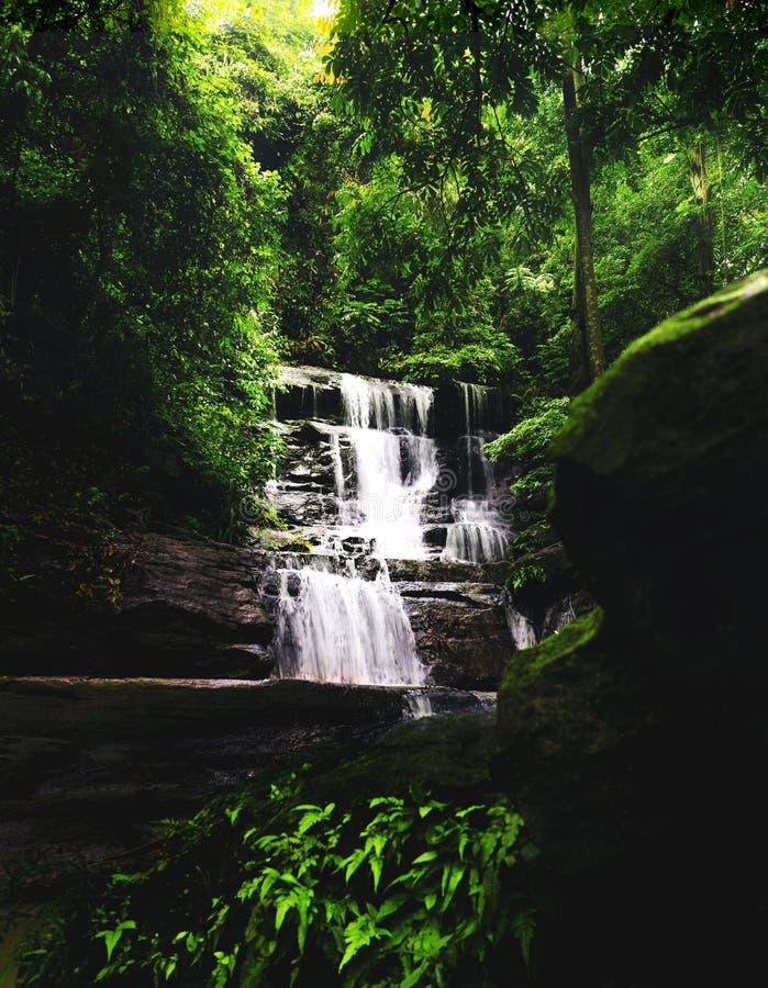Cascata larga calma da cachoeira na floresta tropical obscuro densa foto de stock