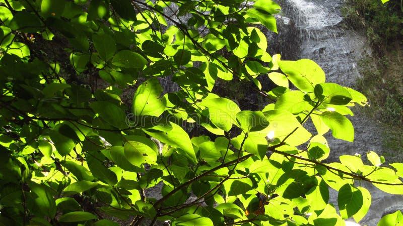 Cascata nella foresta Ciamis Java ad ovest immagini stock