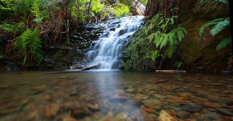 Cascata nella foresta del redwood fotografie stock libere da diritti