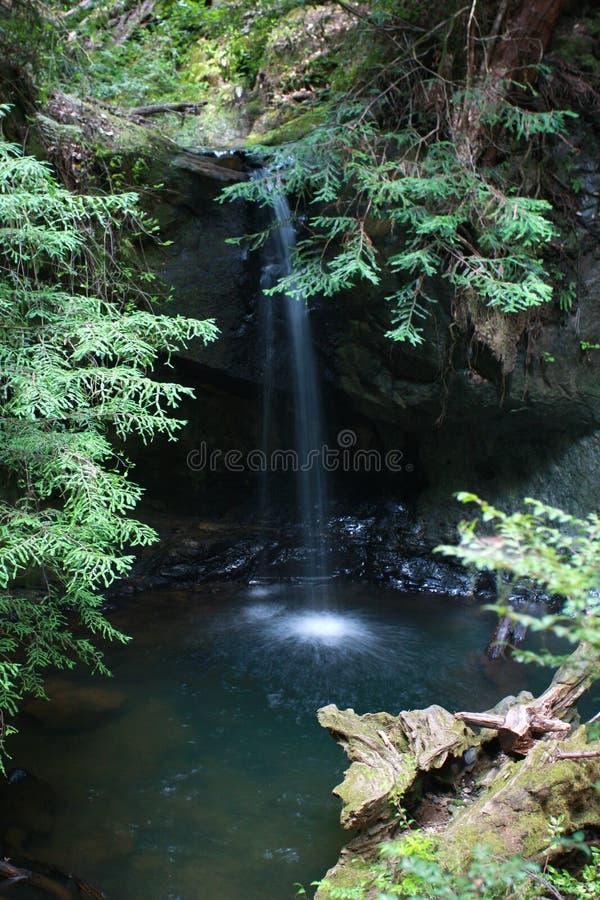 Cascata nella foresta del redwood immagini stock