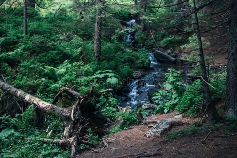 Cascata nella foresta verde, montagne carpatiche immagine stock libera da diritti