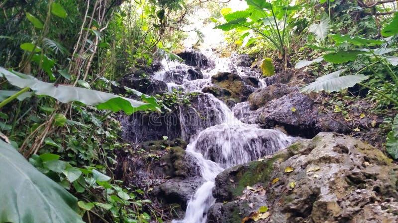 Cascata nella giungla Xcaret Quintana Roo, Messico fotografie stock