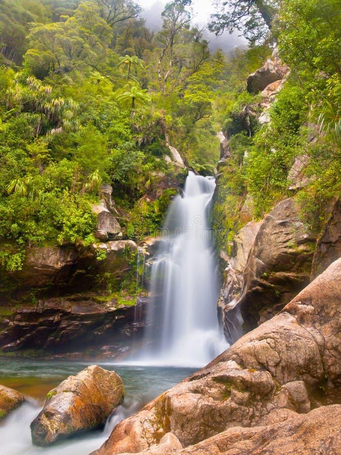 Cascata Nuova Zelanda della foresta pluviale fotografia stock libera da diritti