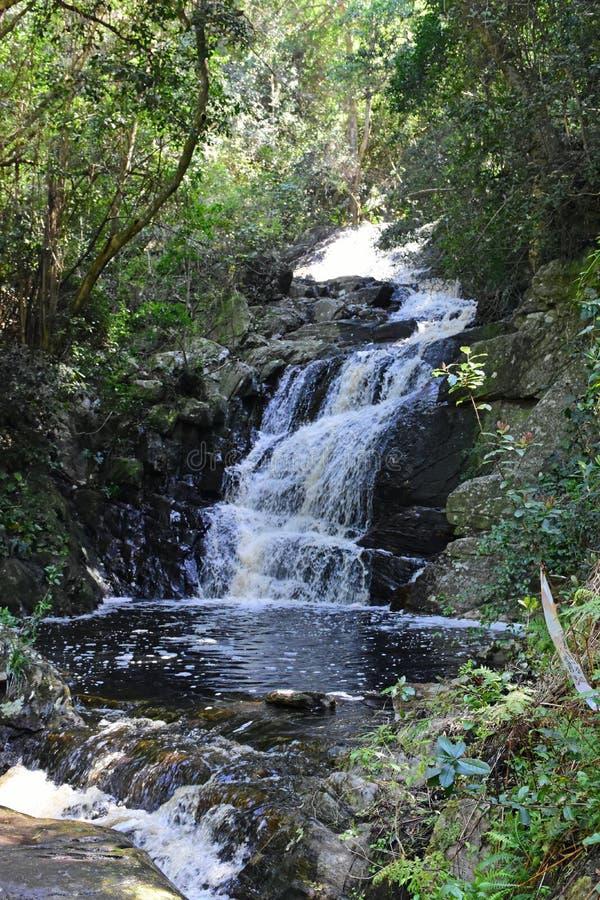 Cascata, parco nazionale di Tsitsikamma, itinerario del giardino, nr Knysna, Sudafrica immagini stock