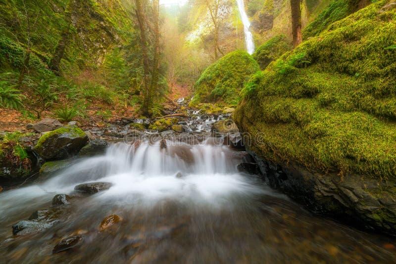 Cascata precipitante a cascata al parco di stato dell'insenatura di inedia Oregon immagini stock