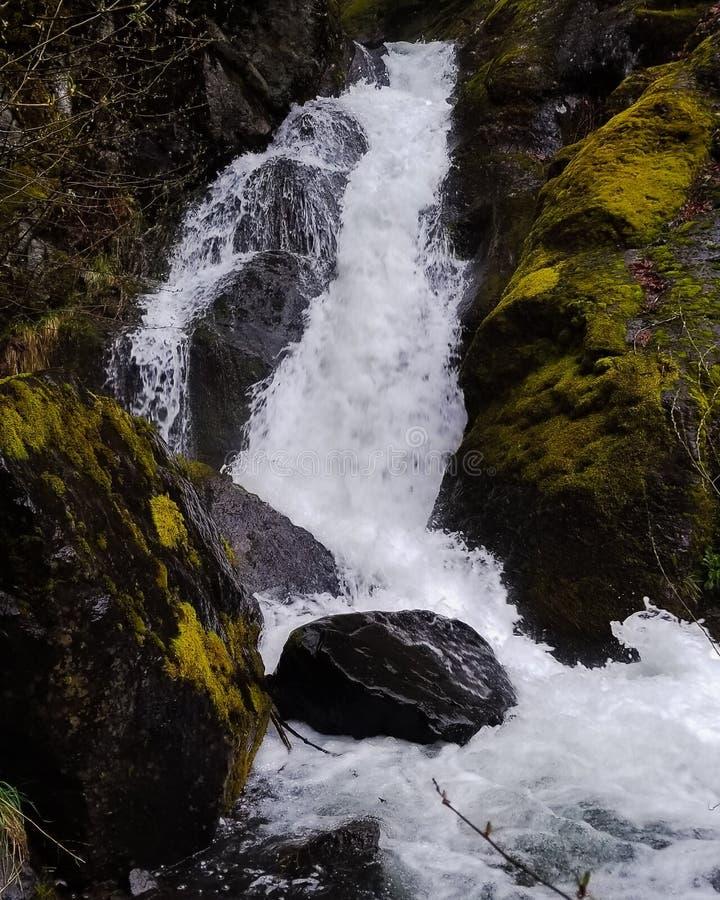 Cascata precipitante dal lato della strada nell'Oregon fotografia stock libera da diritti