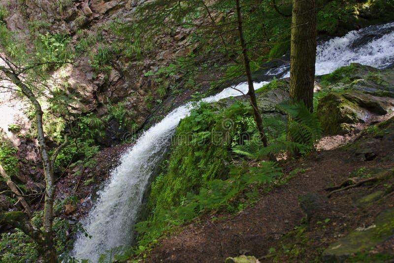 Cascata selvaggia nel Ravennaschlucht di estate fotografie stock libere da diritti