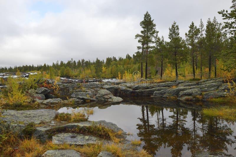 Cascata Trappstegsforsen in Svezia del nord vicino a Vilhelmina immagine stock