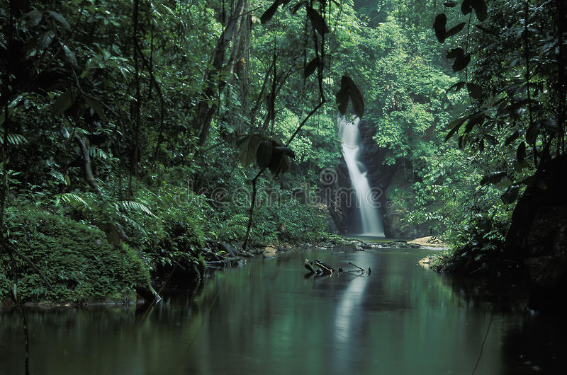 Cascata tropicale, Trinidad immagini stock libere da diritti