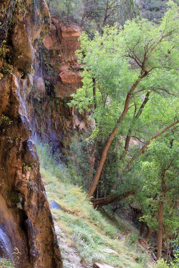 Cascata in Zion Canyon immagine stock libera da diritti