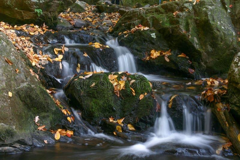 Cascatas ao longo dos planos Spruce no grande parque nacional de montanha fumarento fotografia de stock