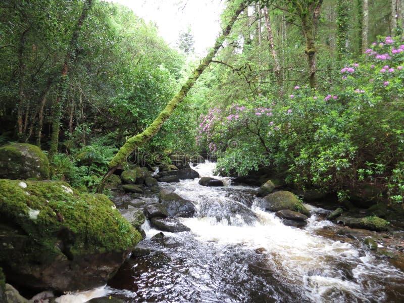 Cascatas da cachoeira imagem de stock