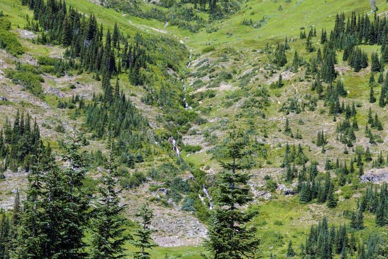 Cascatas nortes, Washington fotografia de stock