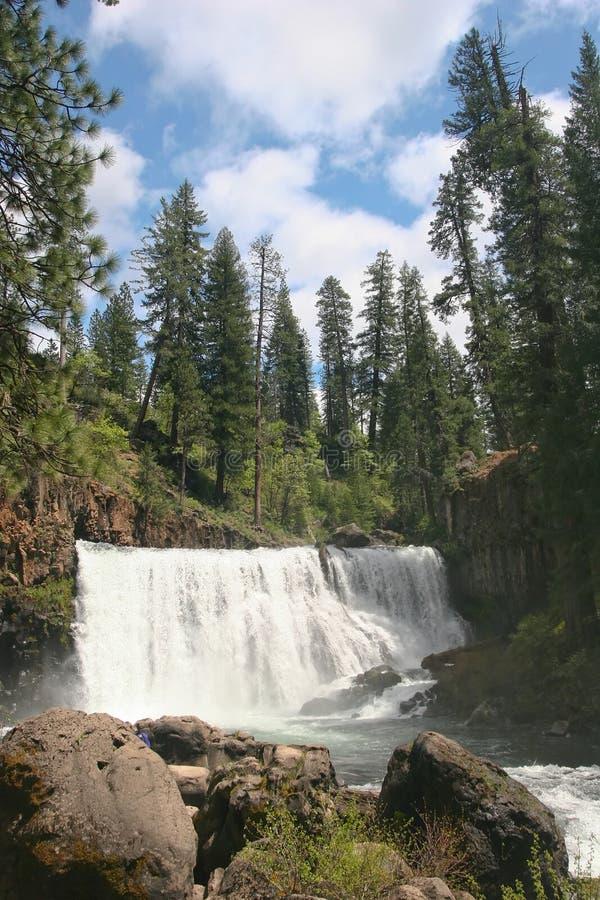 Cascate del lago Shasta immagine stock libera da diritti