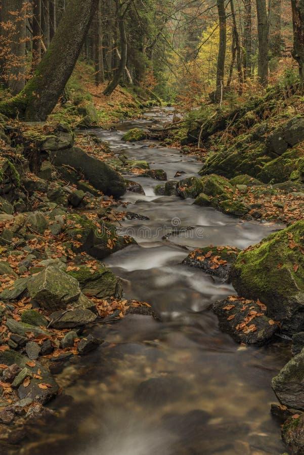 Cascate sul fiume Cista in montagne di Krkonose immagini stock