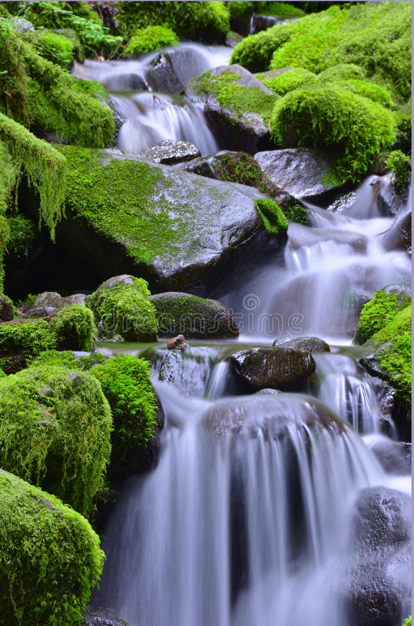 Cascate verdi fotografia stock libera da diritti