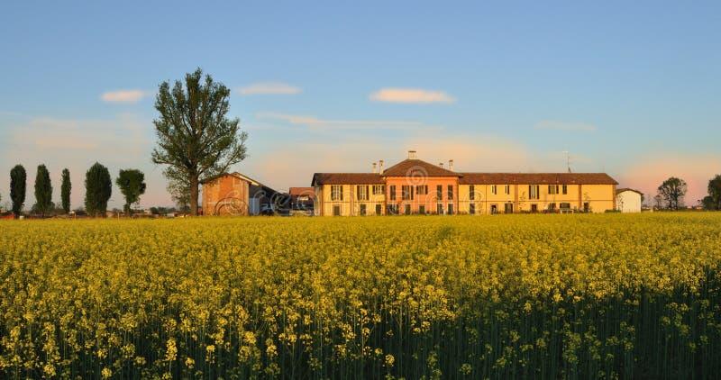 Cascina landwirtschaftliches Gebäude mit Feldsenf (Brassic lizenzfreies stockfoto