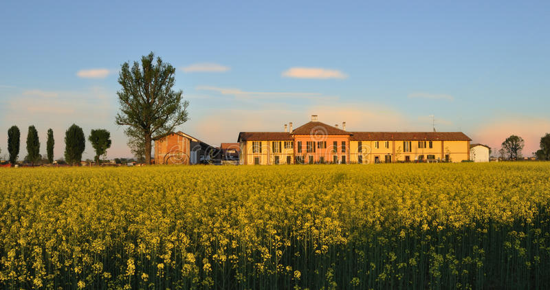 Download Cascina Rural Building With Field Mustard (Brassic Stock Image - Image: 19856765