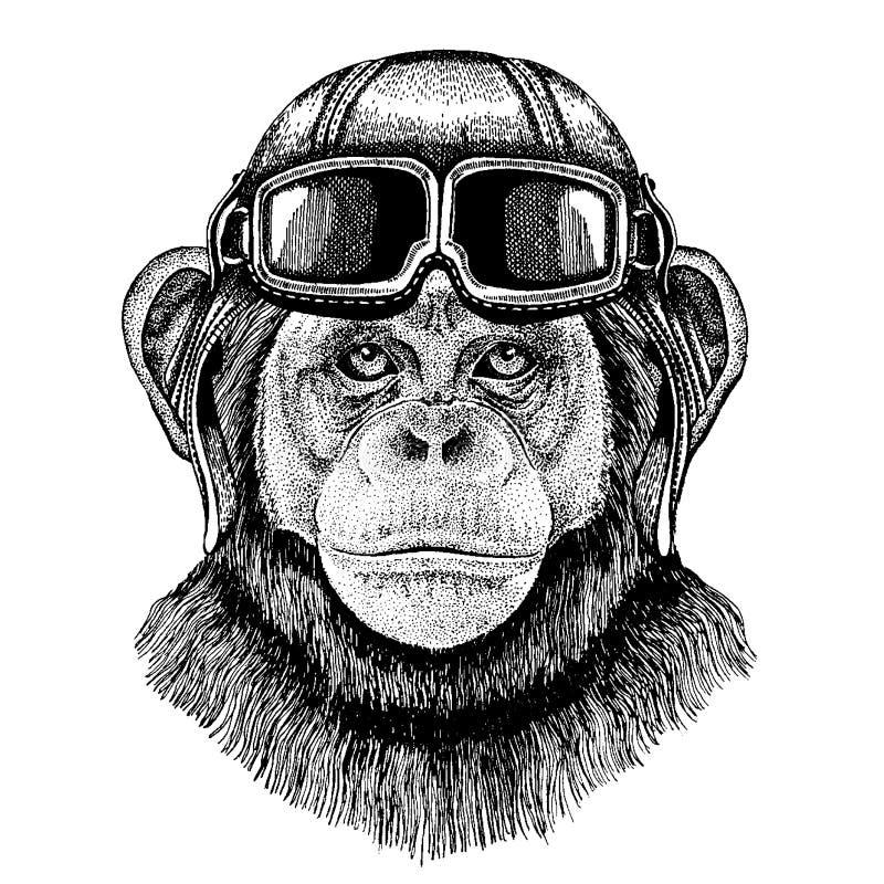 Casco animal del aviador que lleva con los vidrios Cuadro del vector Ejemplo dibujado mano del mono del chimpancé para el tatuaje libre illustration