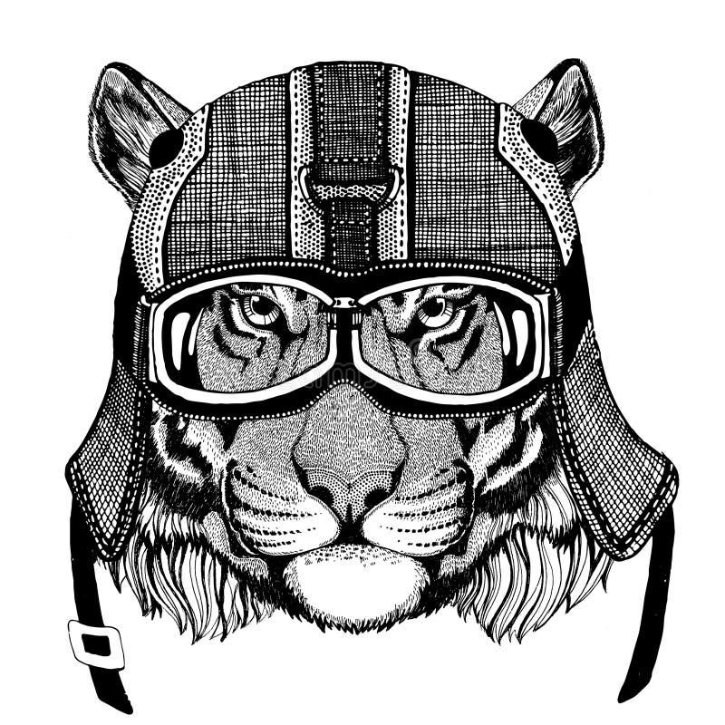 Casco d'uso del motociclo della tigre selvaggia, illustrazione del casco dell'aviatore per la maglietta, toppa, logo, distintivo, fotografie stock