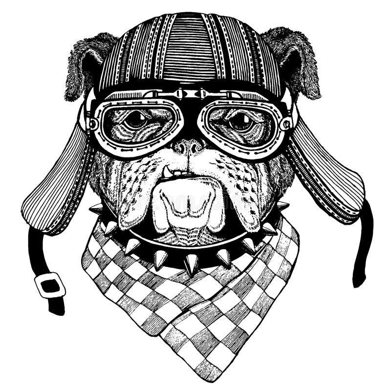 Casco de la motocicleta del animal salvaje del motorista del dogo que lleva r ilustración del vector