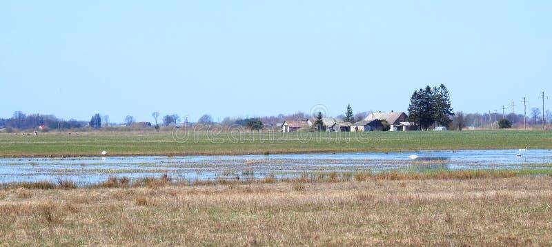 Case in villaggio, giacimento di inondazione con gli uccelli, Lituania immagini stock libere da diritti