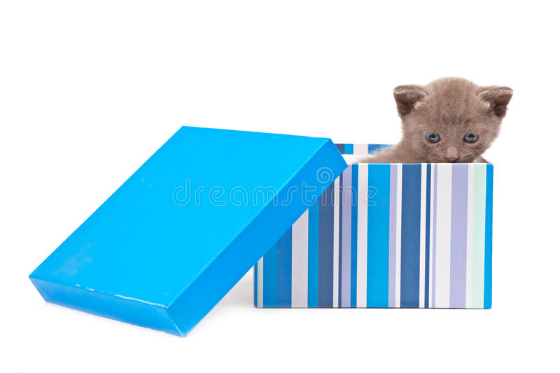 Casella con il gattino fotografia stock