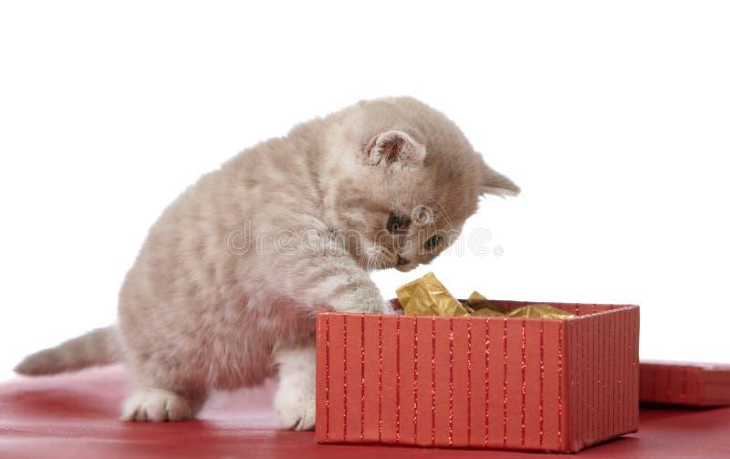 Casella di regalo e del gattino fotografie stock libere da diritti
